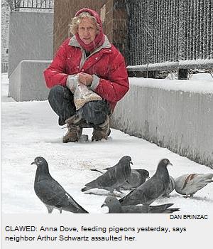 Dove feeding pigeons NY Post photo