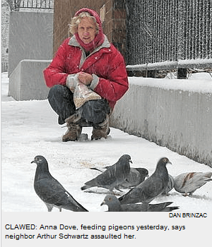 Dove feeding pigeons NY Post photo