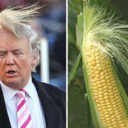 Dump 'n' Trump
